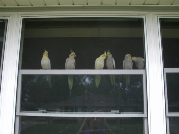 Birds For Sale in Mitchell South Dakota Craigslist